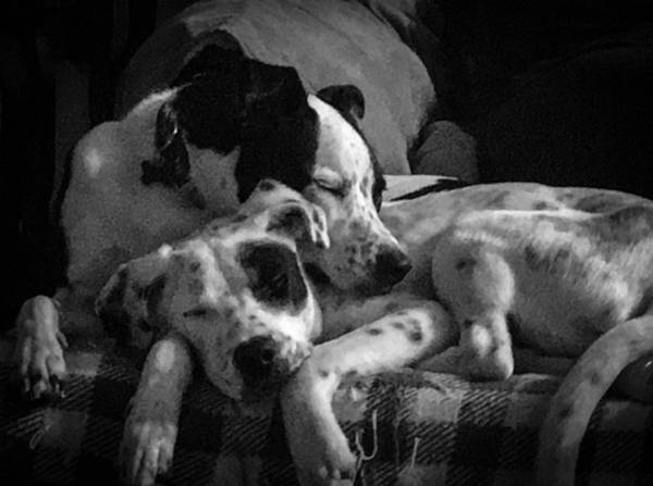 Photograph - Rescued And Best Friends  by Michael Hughes