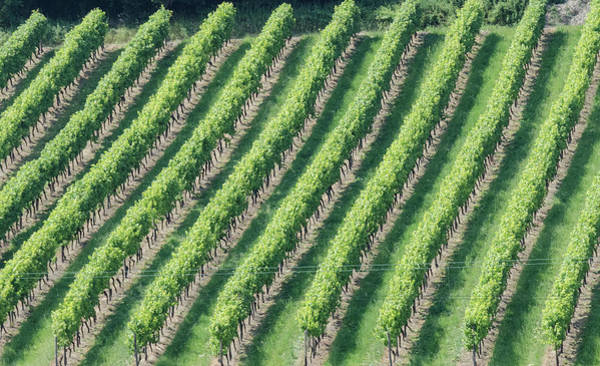 Photograph - Riesling On The Rhine by Paul Croll