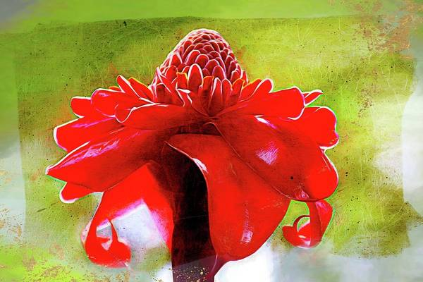 Photograph - Resplendent Red by Alice Gipson
