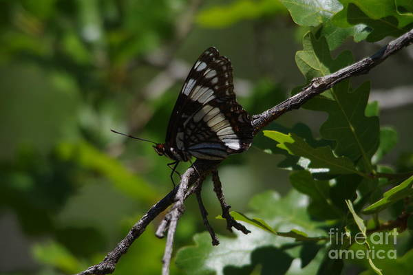 Wall Art - Photograph - Resting Butterfly by Jeff Swan