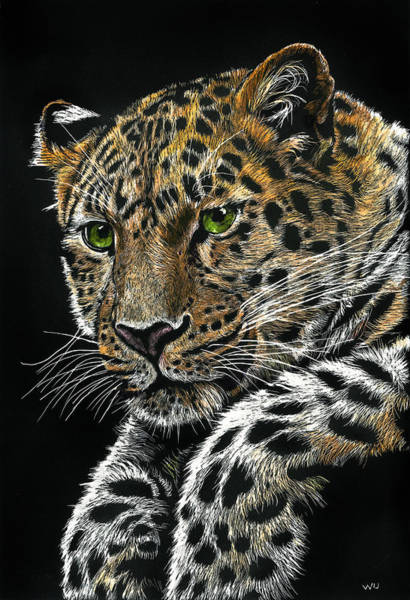 Drawing - Resting Leopard by William Underwood