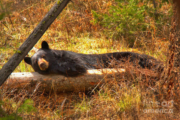 Photograph - Resting On My Favorite Log by Adam Jewell