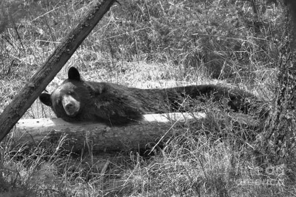 Photograph - Resting On My Favorite Log Black And White by Adam Jewell
