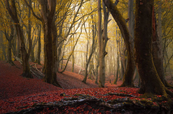Photograph - Ret Root Woods by Rob Visser