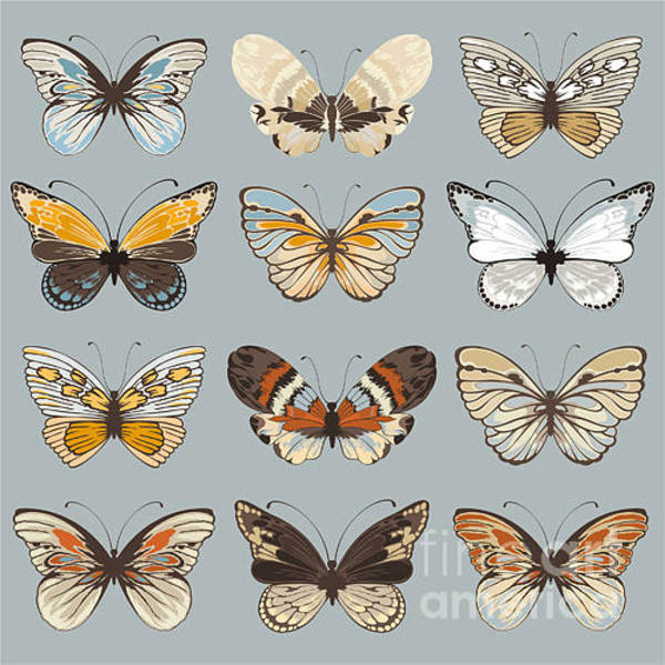 White Butterfly Digital Art - Retro Collection Vector Butterflies by Nikiparonak