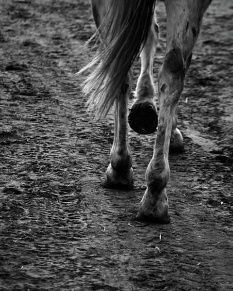 Photograph - Return by Catherine Sobredo