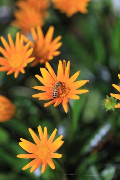 Wall Art - Photograph - Return Of The Pollinator  by Az Jackson