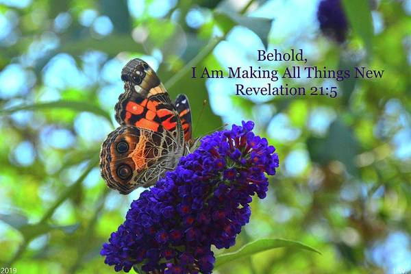 Photograph - Revelation 21 5 Admiral Butterfly by Lisa Wooten