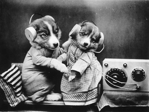 Dressing Up Photograph - Revelling Pups by Fresco