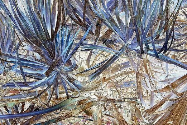 Palm Frond Digital Art - Revivified by John Hintz
