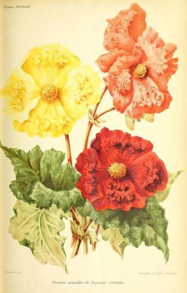 Wall Art - Painting - Revue Horticole  1915  29 by Revue horticole
