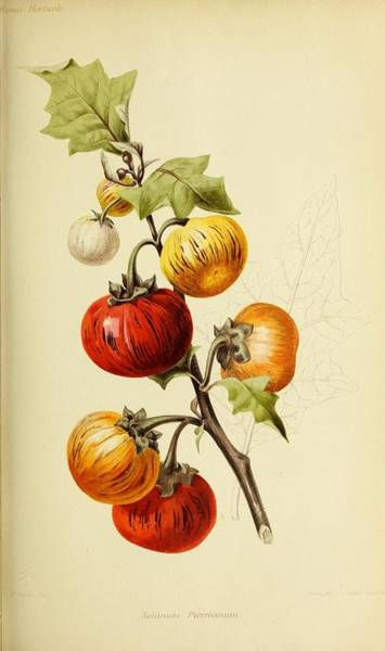 Wall Art - Painting - Revue Horticole  1915 30 by Revue horticole