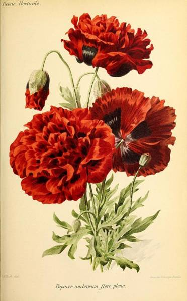 Wall Art - Painting - Revue Horticole  1915 32 by Revue horticole