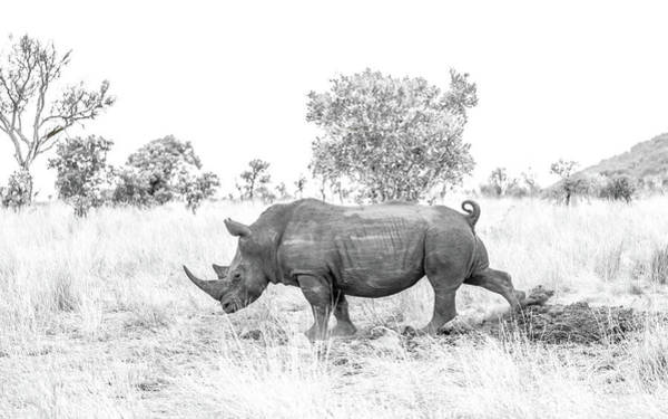 Photograph - Rhino Business by Hamish Mitchell