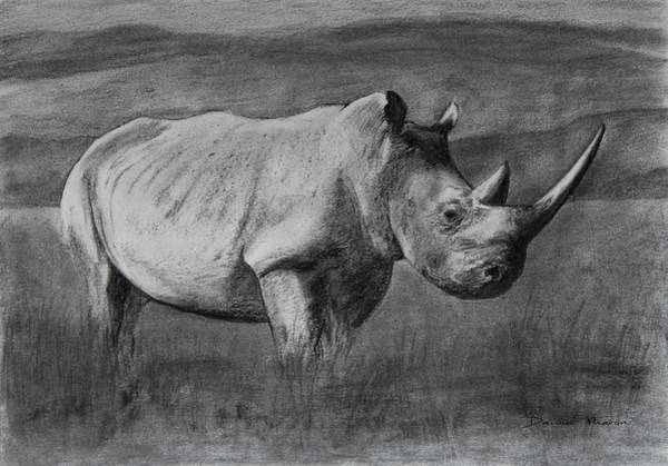 Drawing - Rhino by Dawid Theron