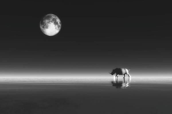 Digital Art - Rhino by Jan Keteleer
