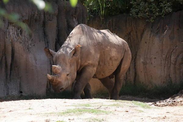 Wall Art - Photograph - Rhino by Raymond Stark