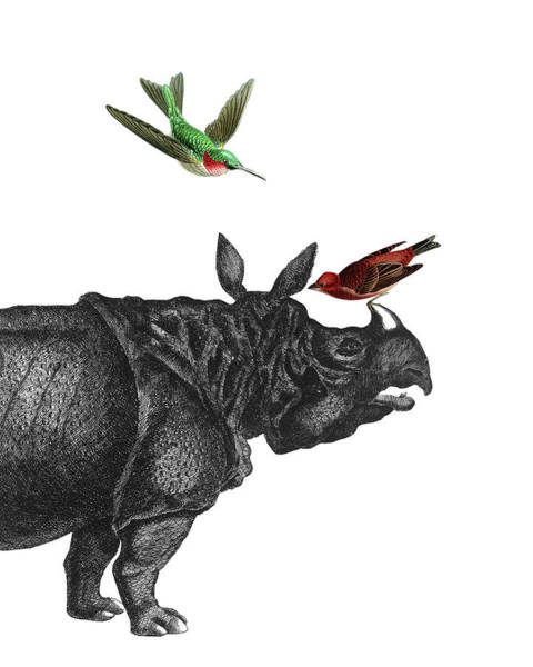 Humming Bird Wall Art - Digital Art - Rhinoceros With Birds Art Print by Madame Memento