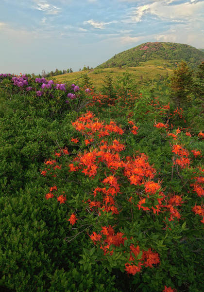 Wall Art - Photograph - Rhododendron And Flame Azalea by Jerry Whaley