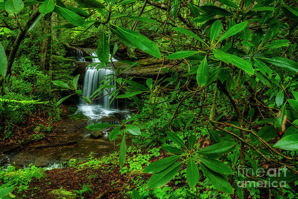 Photograph - Rhododendron Waterfall by Thomas R Fletcher