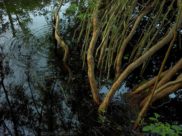 Swamp Photograph - Rhythm by Jerry LoFaro
