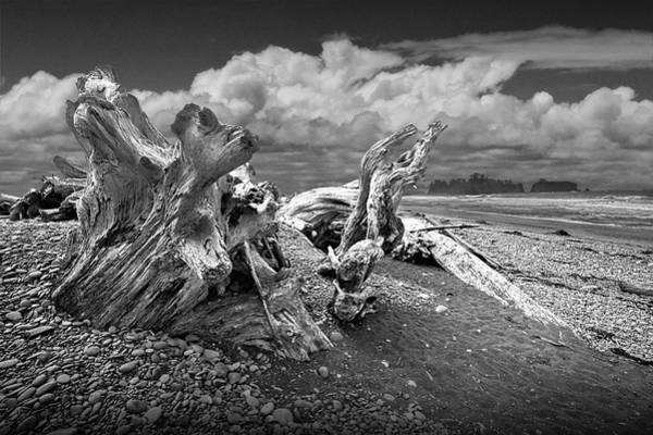 Photograph - Rialto Beach In Olympic National Park In Washington State With Shore Driftwood In Black And White by Randall Nyhof