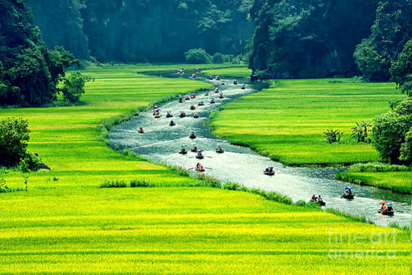 Myanmar Wall Art - Photograph - Rice Field And River, Ninhbinh, Vietnam by John Bill