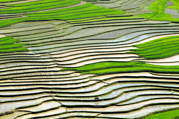 Patterns In Nature Photograph - Rice Field by Life Is Beatiful In Every Moments