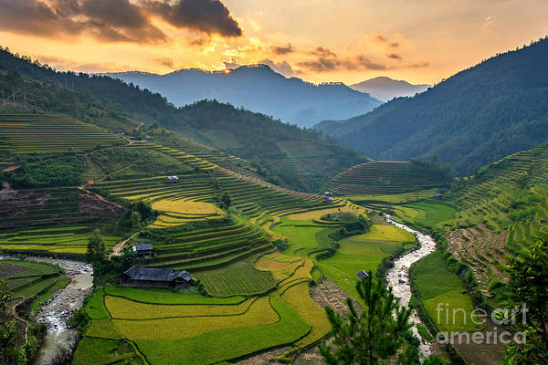 System Photograph - Rice Field On Terraces Panoramic by Cw Pix