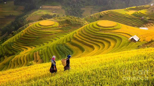 Myanmar Wall Art - Photograph - Rice Fields On Terraced Of Mu Cang by Anek.soowannaphoom