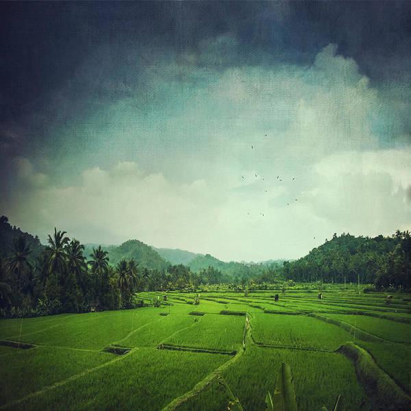 Photograph - Rice Paddy Field Bali - Indonesia by Dirk Wuestenhagen