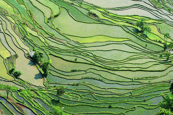 Rice Photograph - Rice Paddy Fields In Southern China by Jialiang Gao