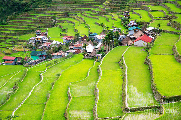 Myanmar Wall Art - Photograph - Rice Terraces In The Philippines. The by Frolova elena
