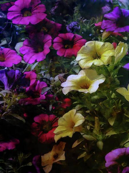 Photograph - Rich Petunias 6551 Idp_2 by Steven Ward