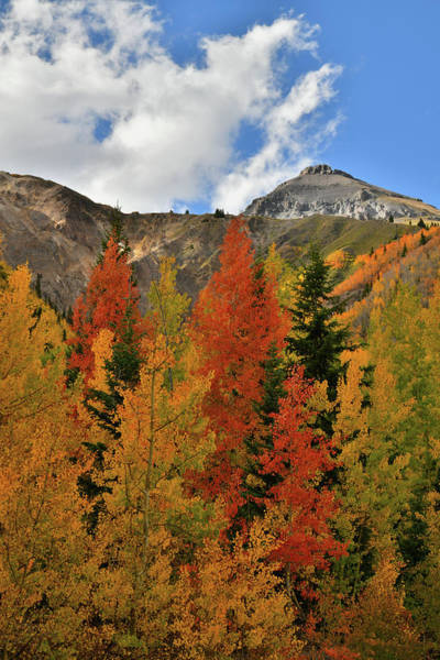 Photograph - Richly Colored Aspens At Red Mountain Pass by Ray Mathis