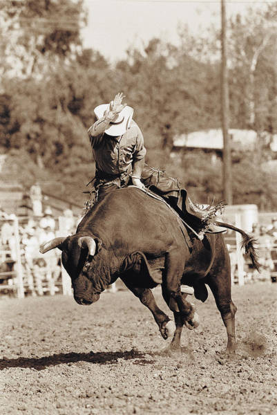 Black Buck Photograph - Rider About To Fall Off Bucking Bull by Kimball Hall