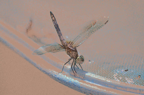 Photograph - Riding The Rim Dragon Fly Art by Lesa Fine