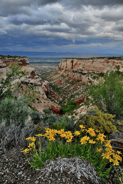 Photograph - Rim Rock Drive Wildflowers by Ray Mathis