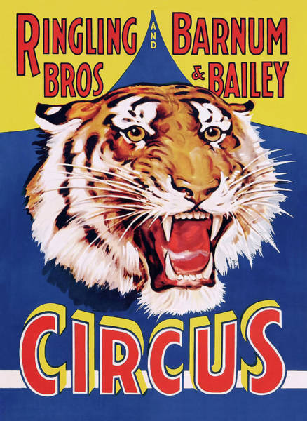 Wall Art - Photograph - Ringling Classic Circus Tiger C. 1934 by Daniel Hagerman