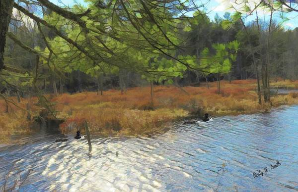 Digital Art - Ringneck Ducks In New England Marsh. by Rusty R Smith