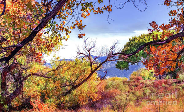 Photograph - Rio Grande Open Space by Susan Warren