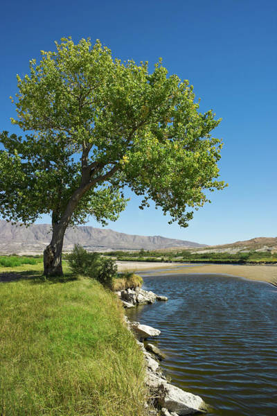 Photograph - Rio Grande River And Cottonwood Tree El by Dszc