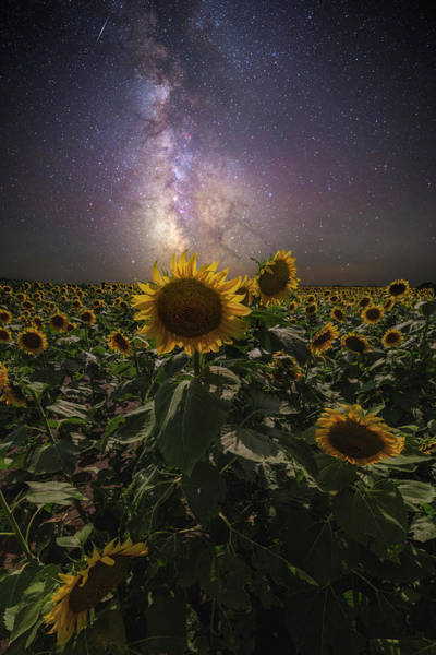 Wall Art - Photograph - Rise Up  by Aaron J Groen