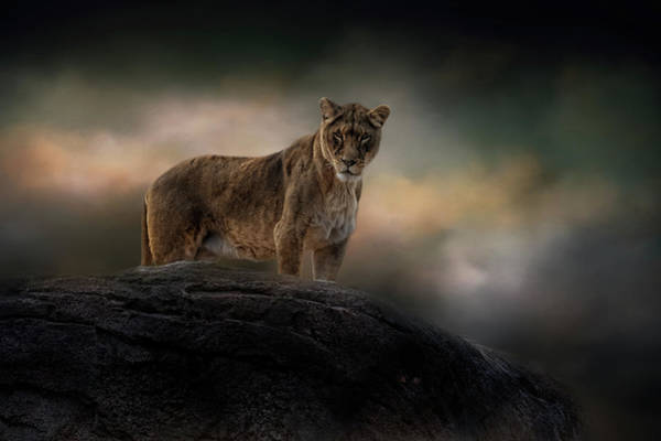 Photograph - Rising Above The Storm by Kelley Parker