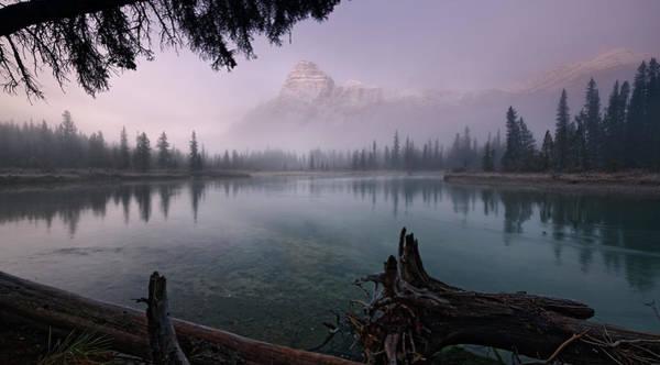 Photograph - Rising From The Fog by Dan Jurak