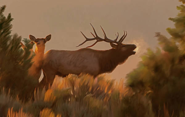 Digital Art - Rites Of Fall- Bugling Elk by Mark Miller