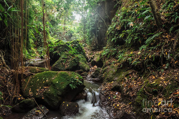 River In Stones Of Tropical Jungle Art Print