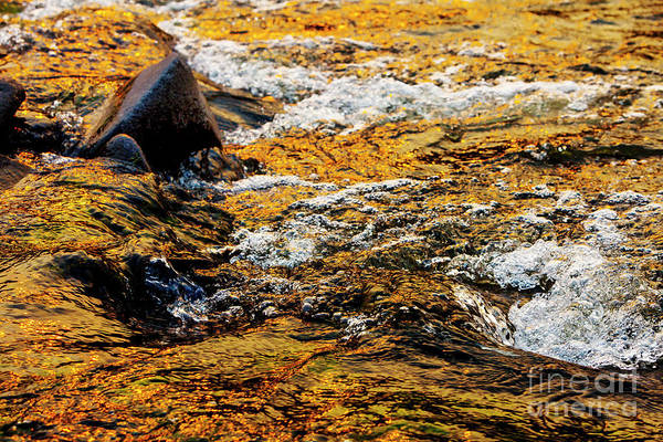Photograph - River Of Gold by David Millenheft
