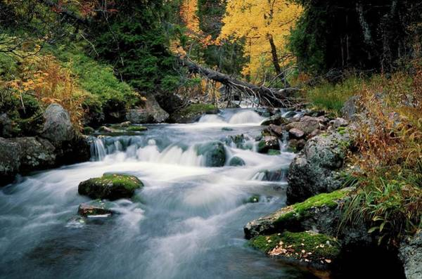 Birch River Photograph - River Passing Through A Forest by Torbjorn Arvidson