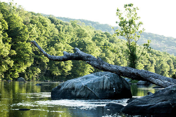 Photograph - River Tree by JimO Ogilvie